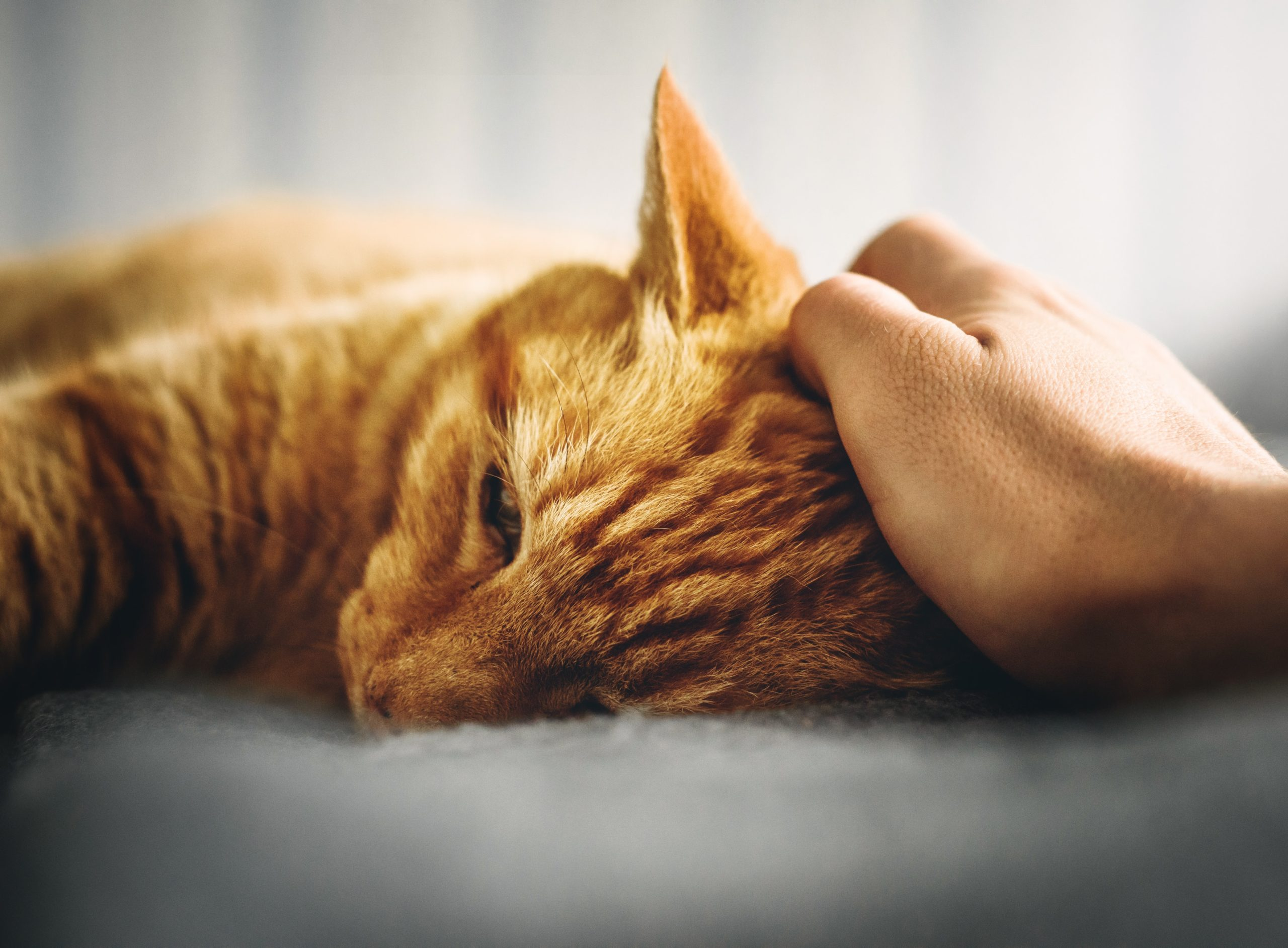 Der beste Freund des Menschen – Haustiere in der Pflege